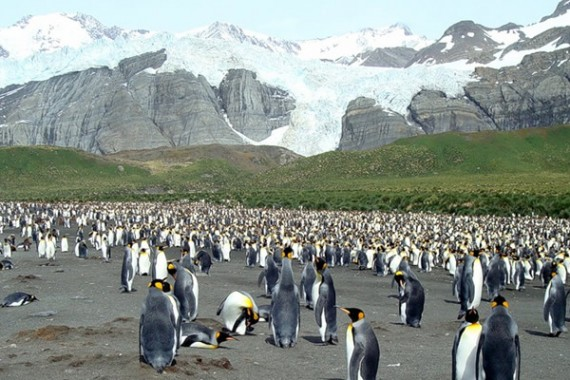 cruise-falkland-islands-antarctica1