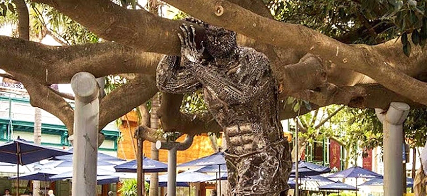 Strongest man supports oldest tree Buenos Aires