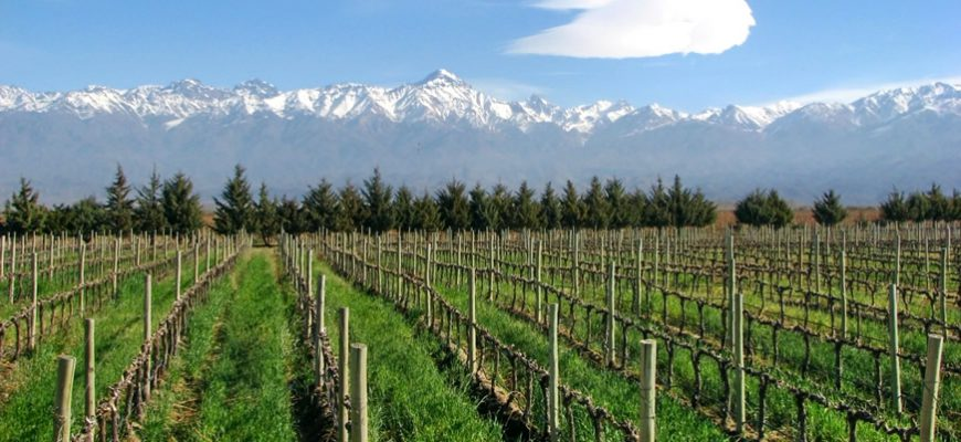 Uruguayan Wine Fair Comes to Buenos Aires